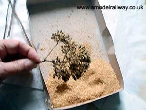 yarrow sprig covered in sawdust